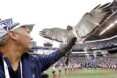 Seattle's live seahawk mascot goes off course before game, lands on fan's head
