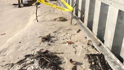 Photos: Air Force bomb squad called after land mines found on Florida beach