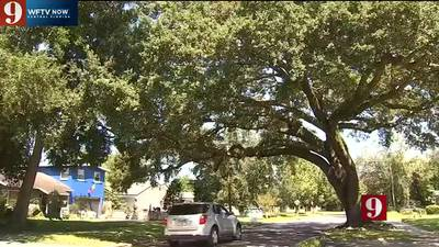 Washington Shores residents worry about overgrown city trees