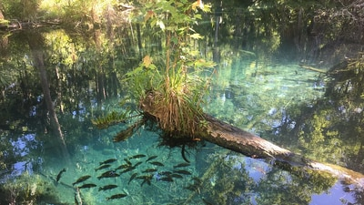 Governor Ron DeSantis approves acquisition of 20,000 acres for conservation