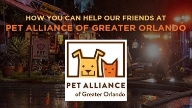 How you can help our friends at Pet Alliance of Greater Orlando